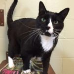 Oliver – Cat of the Week