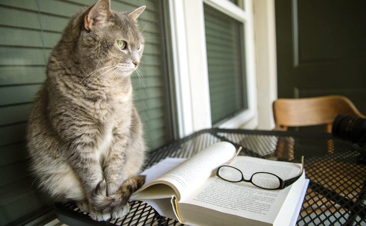 Literary Cat Names - Famous Authors