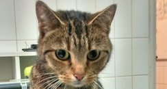 Cat Found At M40 Service Station In Berkshire