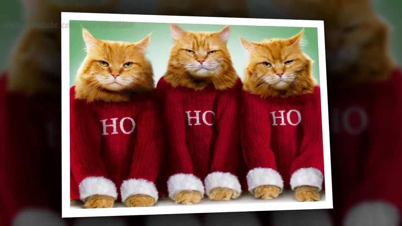 Funny Cat Videos Christmas cats 2015
