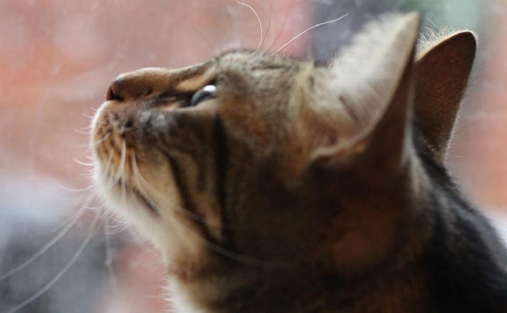 Preston could be getting its very own cat cafe