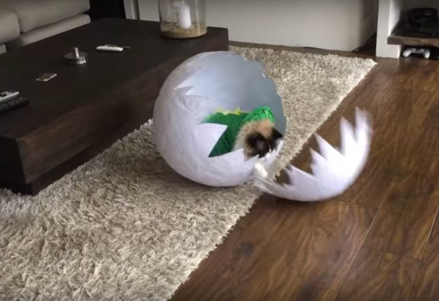Cat In Dinosaur Costume Hatching From Giant Egg