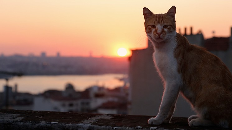 Tracking the Street Cats of Istanbul, Kedi Reveals a City's Humanity