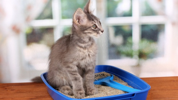 Think outside the box: Things you never knew you could do with cat litter