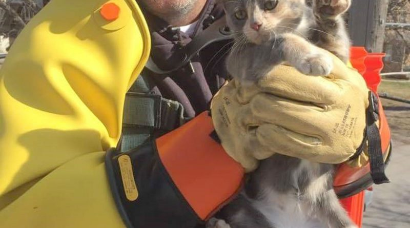 City line crew rescues cat