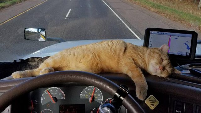 Miracle cat survives 400-mile trip under 18-wheeler