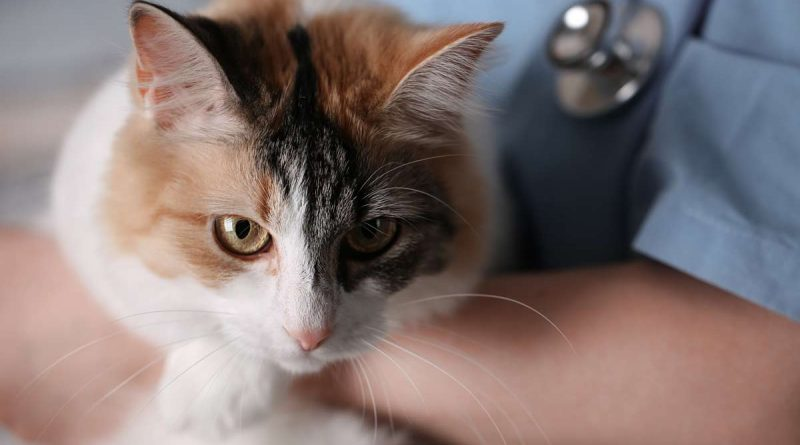 Common Meds Pose A Serious Threat To Cats Kittymews