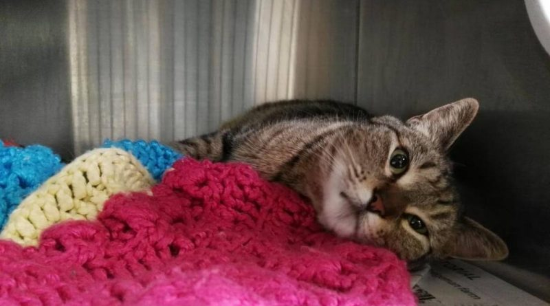 After disappearing from NorCal home, cat is found years later – in Ontario, Canada