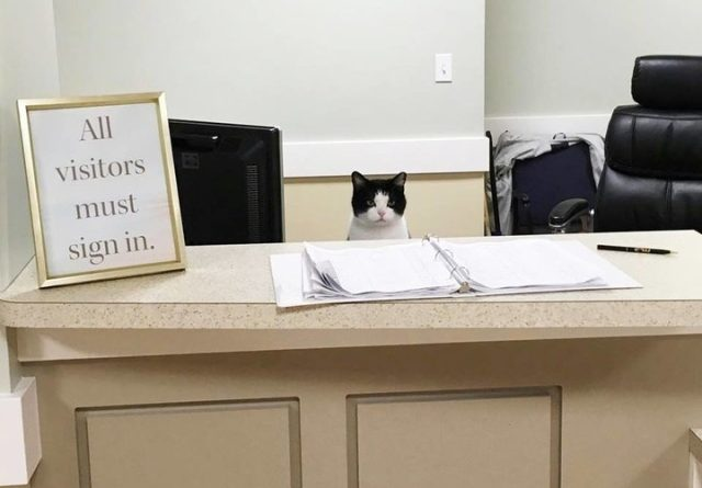 Stray cat wanders into nursing home, gets job