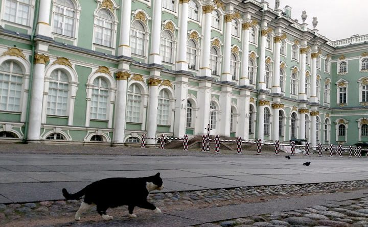 Cat at Hermitage Museum in Russia by Ana Paula Hirama