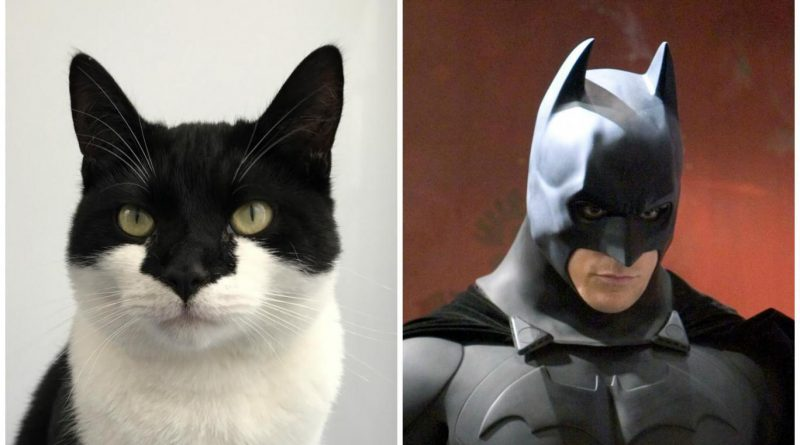 It's batcat! Wood Green cat with striking resemblance to Batman up for adoption