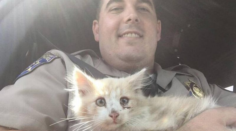 CHP officers save kitten on Golden Gate Bridge. One officer fosters him