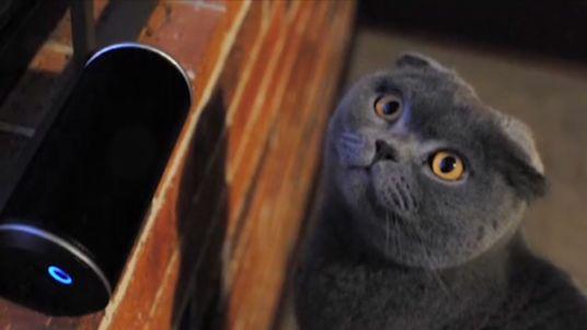 Mognificent Music? Composer's Album For Cats