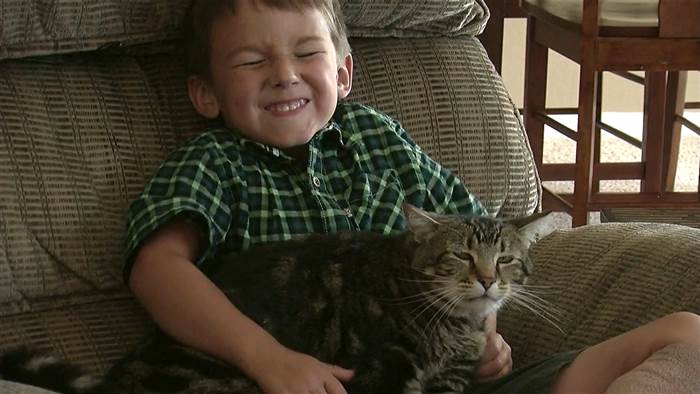 Good kitty: These 6 'hero cats' saved the humans they loved