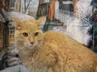 Adopt A Pet: Orange tabby cat ready to play, friendly with dogs