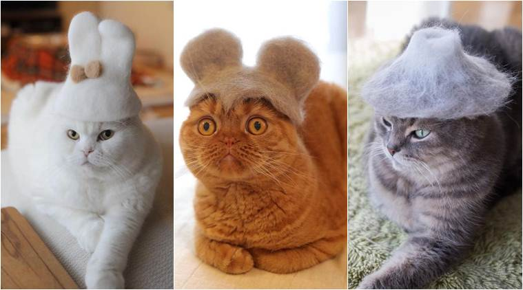 Japanese photographer makes adorable hats for his cats, but the real heroes are the furry balls