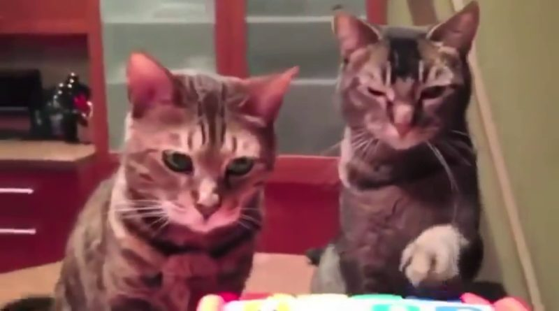 Funny Cats Compilation Funny Cats Videos Compilation #9