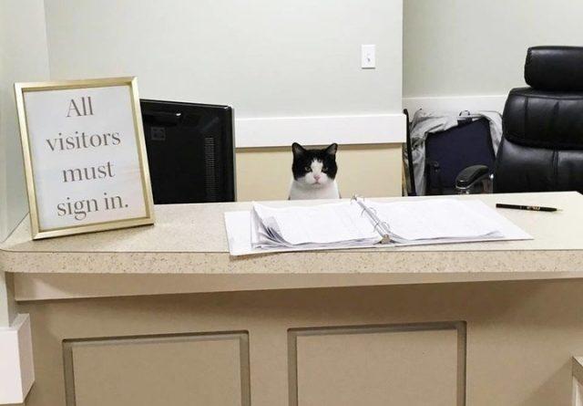 Stray cat wanders into nursing home, gets job