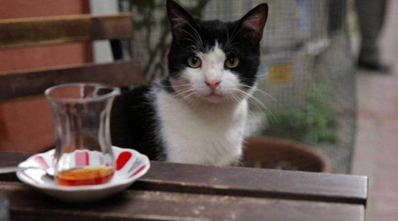 'Kedi' cat documentary returns to The Rialto in Raleigh