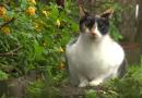 Can Cats Detect Diabetes?