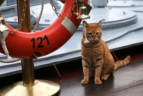 Russian navy shares photo of first cat to travel to the Syrian coast