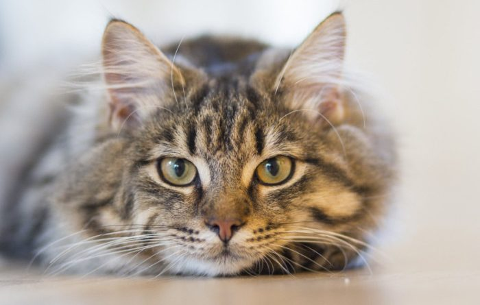 Sunburn advice issued to cat owners