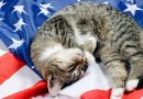 How to Keep Your Cat Safe (and Happy) on July 4th
